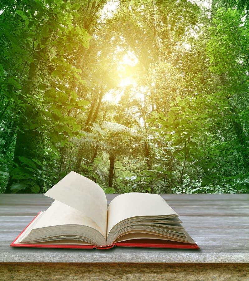 Libro aperto e foresta fotografia stock libera da diritti