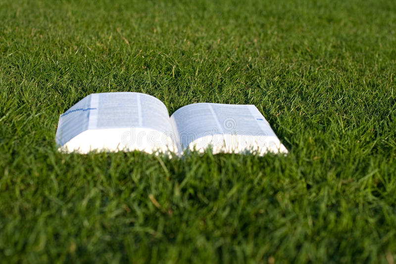 Libro aperto su erba verde fotografia stock