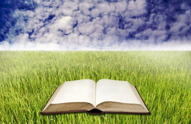 Libro in bianco sul giacimento del riso con cielo blu fotografia stock