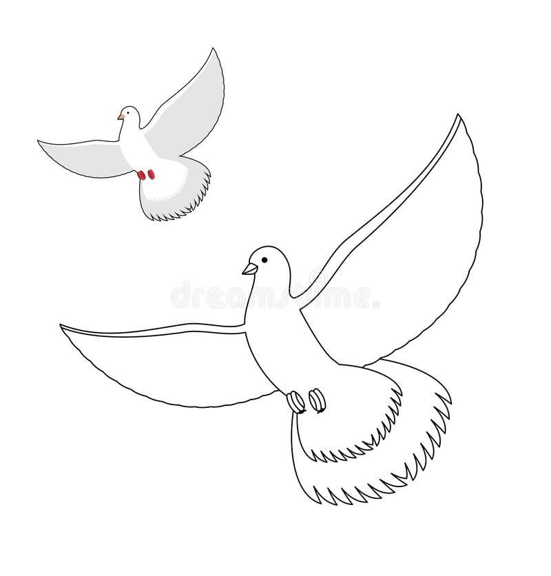 Libro da colorare della colomba di bianco Piccione bianco volante Wavi dell'uccello di contorno illustrazione di stock