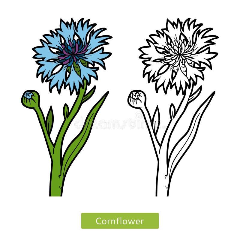 Libro de colorear, aciano de la flor libre illustration