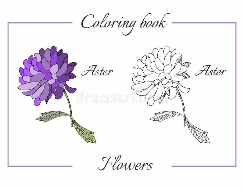 Libro de colorear con la flor hermosa del aster ilustración del vector
