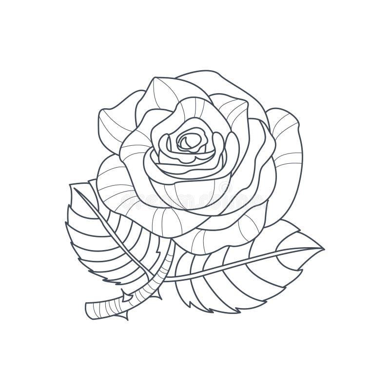 Libro de colorear de Rose Flower Monochrome Drawing For ilustración del vector