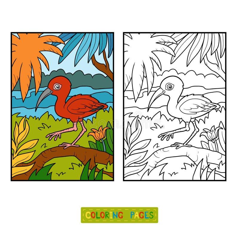 Libro de colorear, escarlata Ibis stock de ilustración