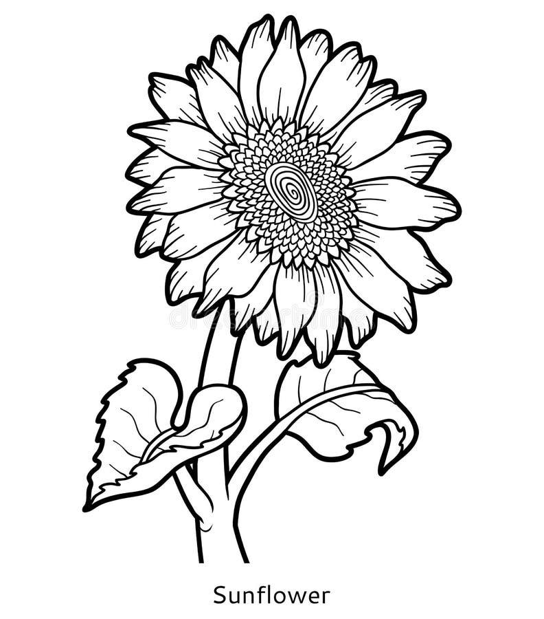 Libro de colorear, girasol de la flor stock de ilustración