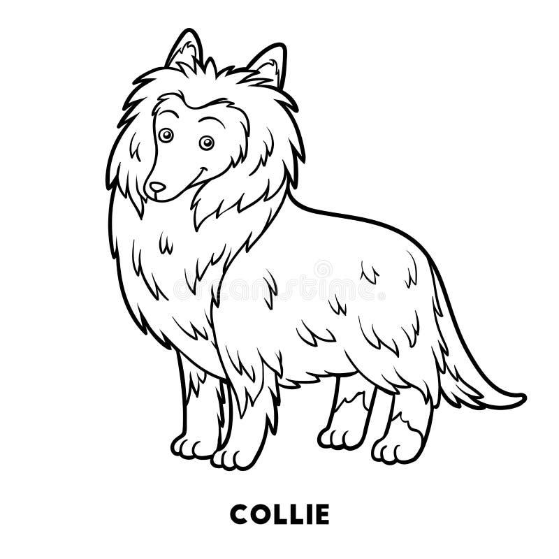 Libro de colorear, razas del perro: Collie stock de ilustración