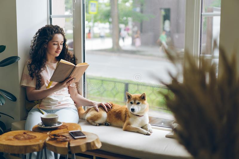 Libro de lectura del estudiante y perro casero el frotar ligeramente que se sienta en travesaño de la ventana en café fotos de archivo libres de regalías