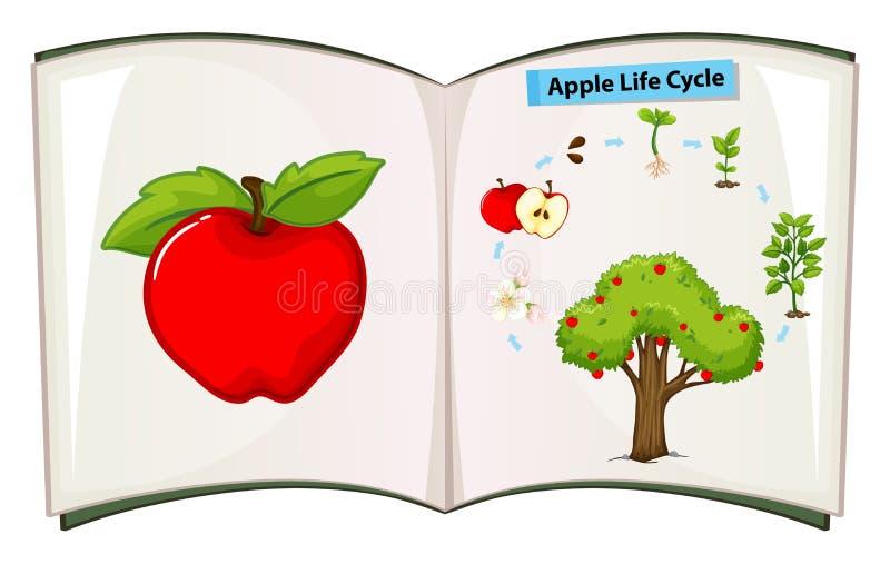 Libro del ciclo di vita della mela illustrazione vettoriale