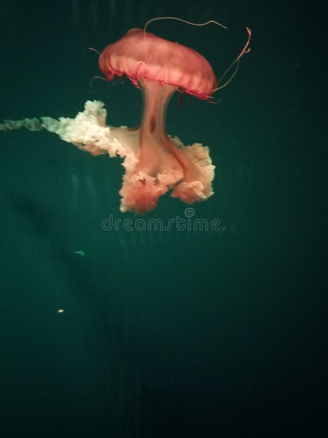 Libro di guinness del mondo del mare dei record del mondo fotografia stock