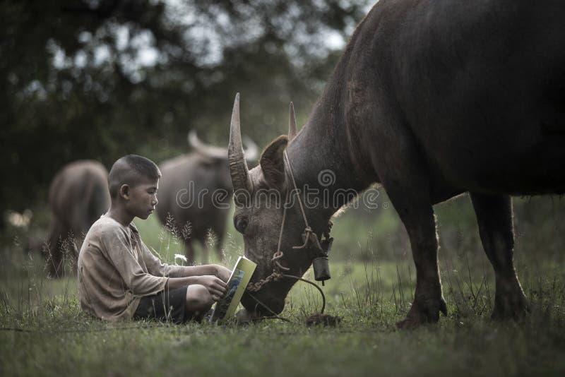 Libro di lettura del ragazzo con lui bufalo immagine stock