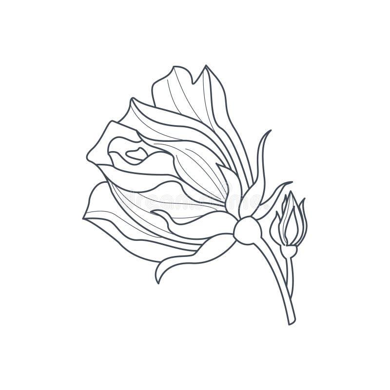 Libro di Rose Bud Monochome Drawing For Coloring royalty illustrazione gratis