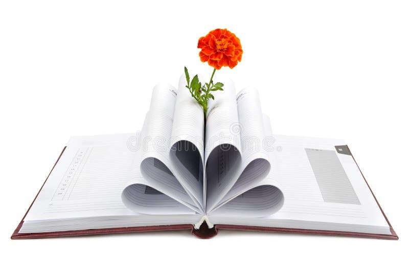 Libro e fiore immagine stock libera da diritti