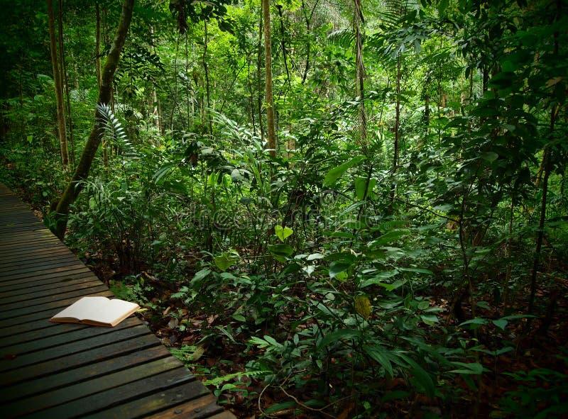 Libro en rastro de la selva tropical fotos de archivo libres de regalías