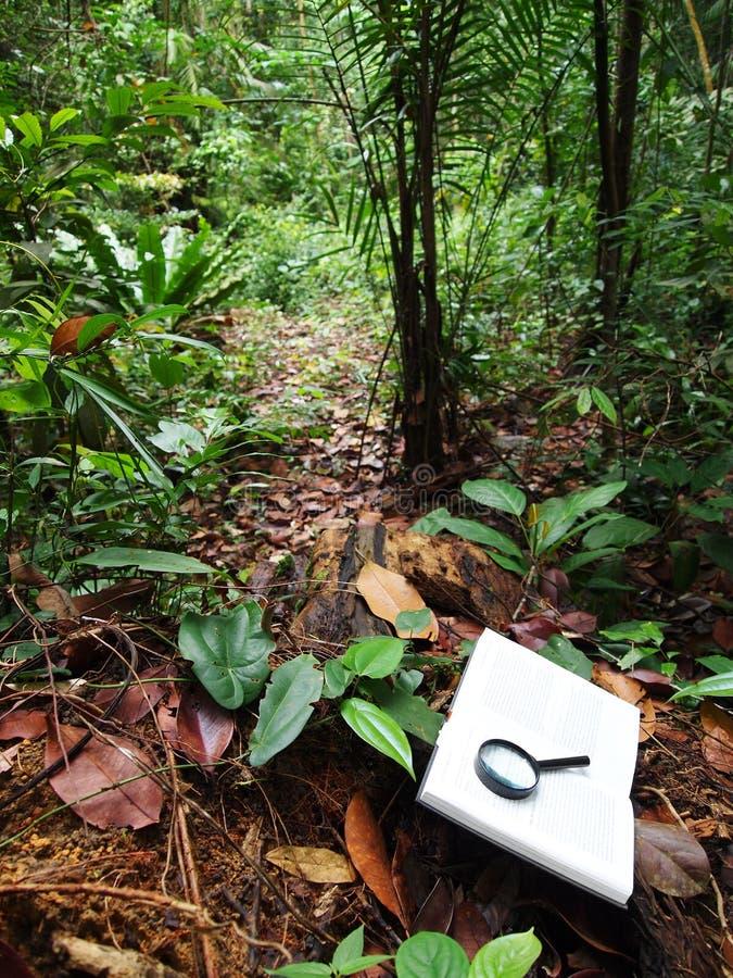 Libro en selva tropical tropical imágenes de archivo libres de regalías