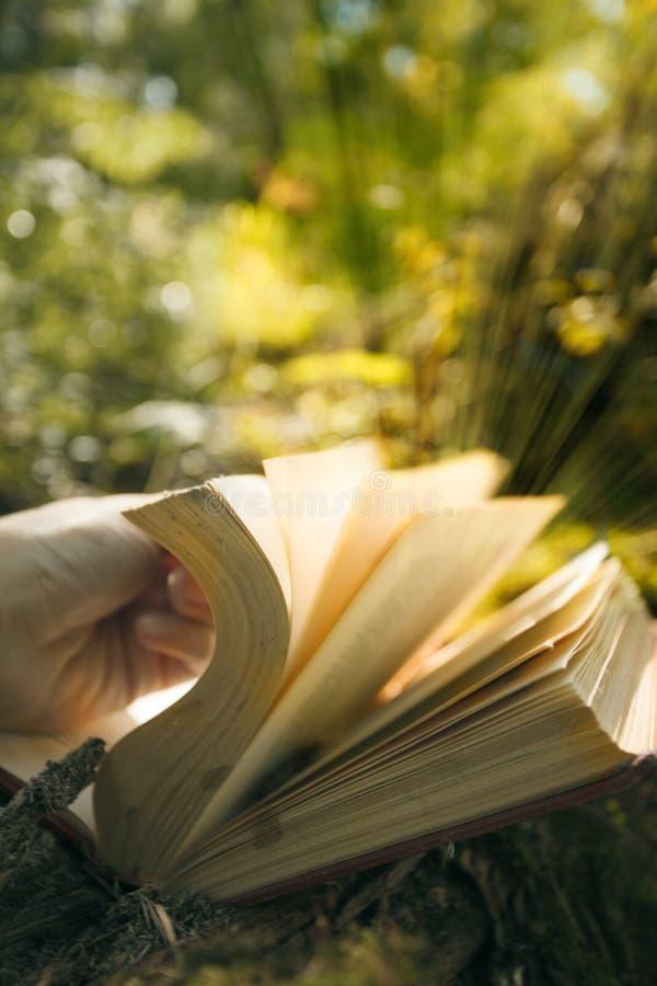 Libro mágico que brilla intensamente con las luces ámbar contra el bosque verde hermoso, misterio, primer espiritual imágenes de archivo libres de regalías