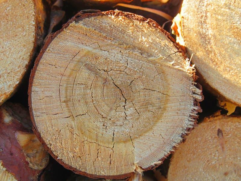 Download Libro macchina fotografia stock. Immagine di legname - 55356296