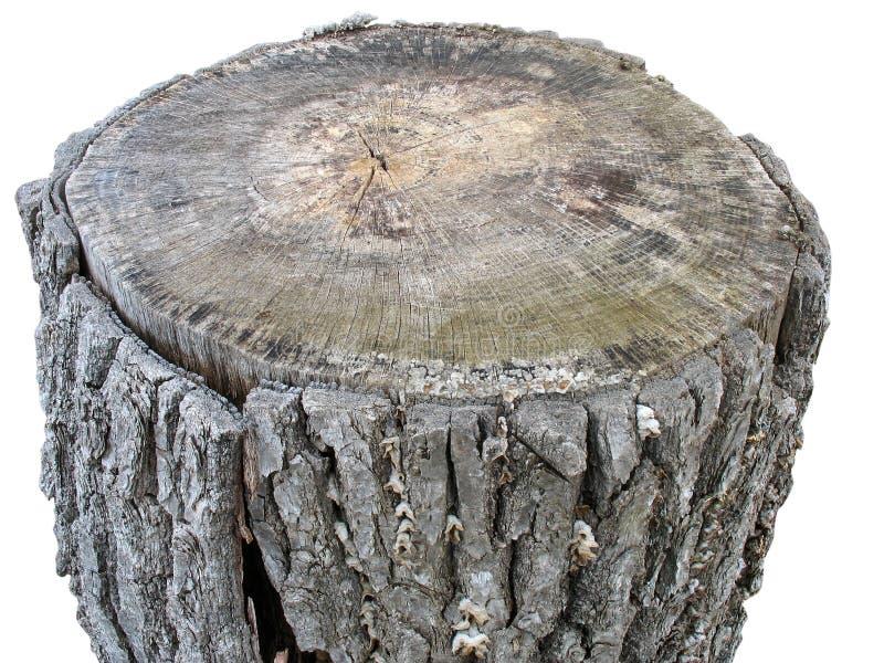 Libro macchina di legno della betulla isolato su bianco fotografia stock libera da diritti