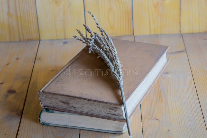 Libros e hierba imagen de archivo