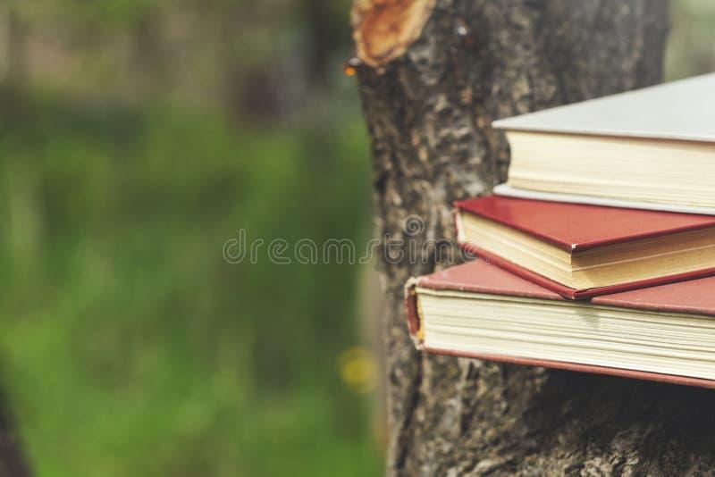 Libros en árbol foto de archivo libre de regalías