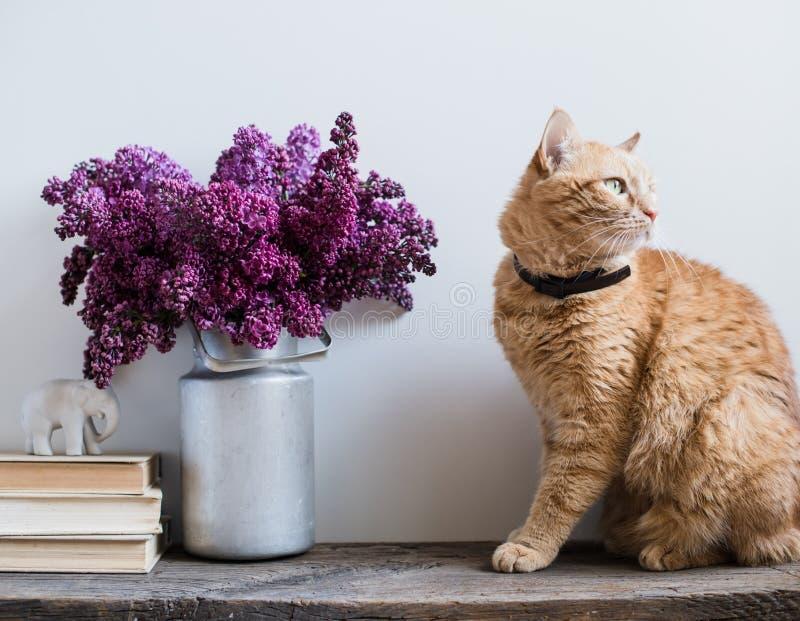 Libros y gato del jengibre foto de archivo
