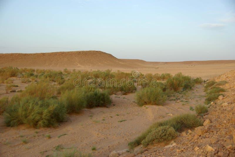 Libyan desert stock photo