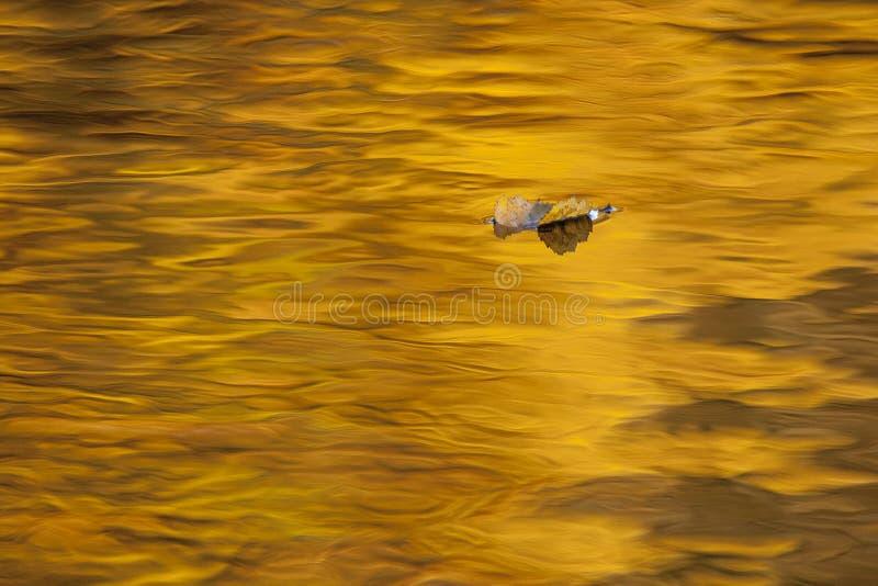 Licença alaranjada caída na água alaranjada, autmun fotos de stock royalty free
