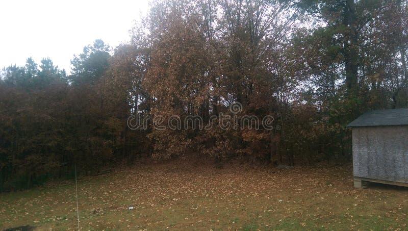 Licença da árvore da queda imagens de stock royalty free
