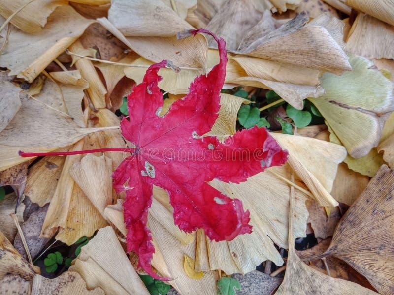 Licença de outono fotografia de stock