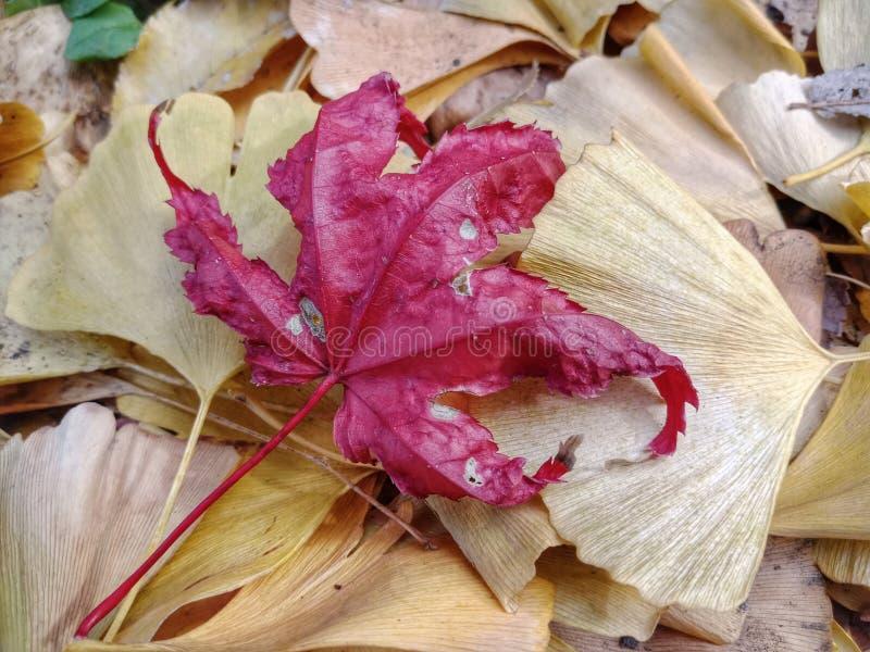 Licença de outono foto de stock royalty free