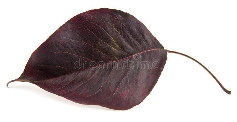 Licença de outono vermelha imagens de stock royalty free
