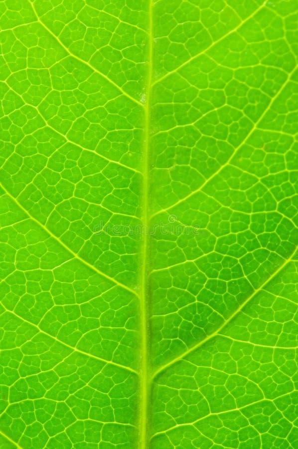 Licença Verde Fotografia de Stock