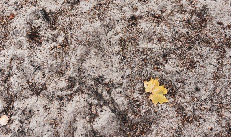 Licencia de otoño amarilla en la textura blanca de la arena imagenes de archivo