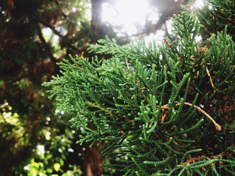Licencia verde del árbol imagenes de archivo