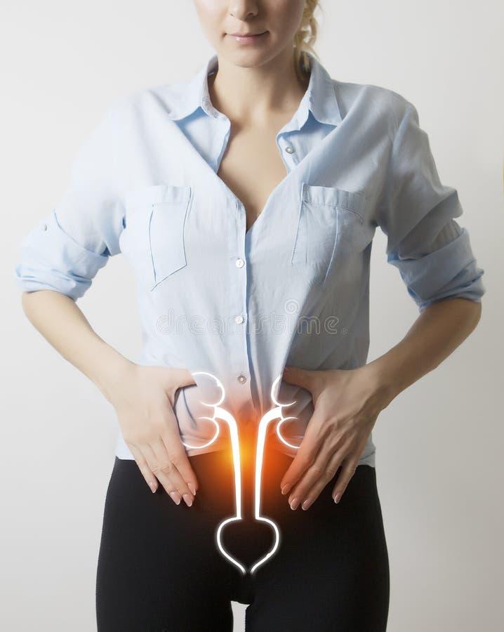 lichaam met visualisatie van nieren en blaas royalty-vrije stock afbeelding