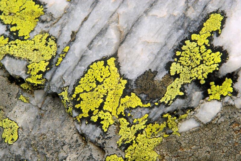 Lichen images libres de droits