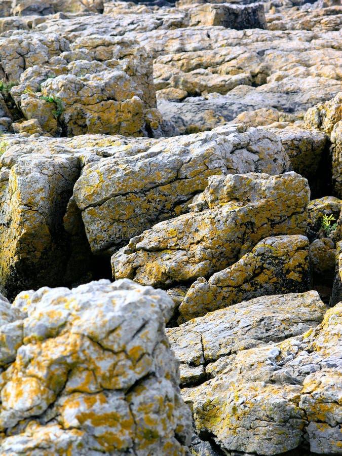 Lichen Beach Rocks fotos de archivo libres de regalías