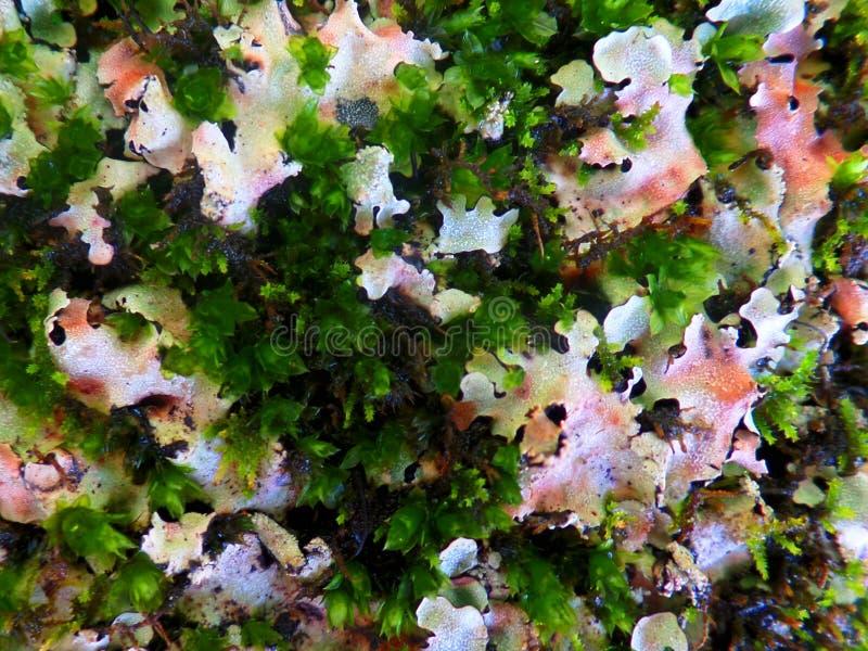 Lichen boquet stock images