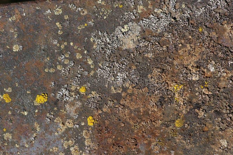 Lichen Community em Rusty Iron Plate foto de stock royalty free