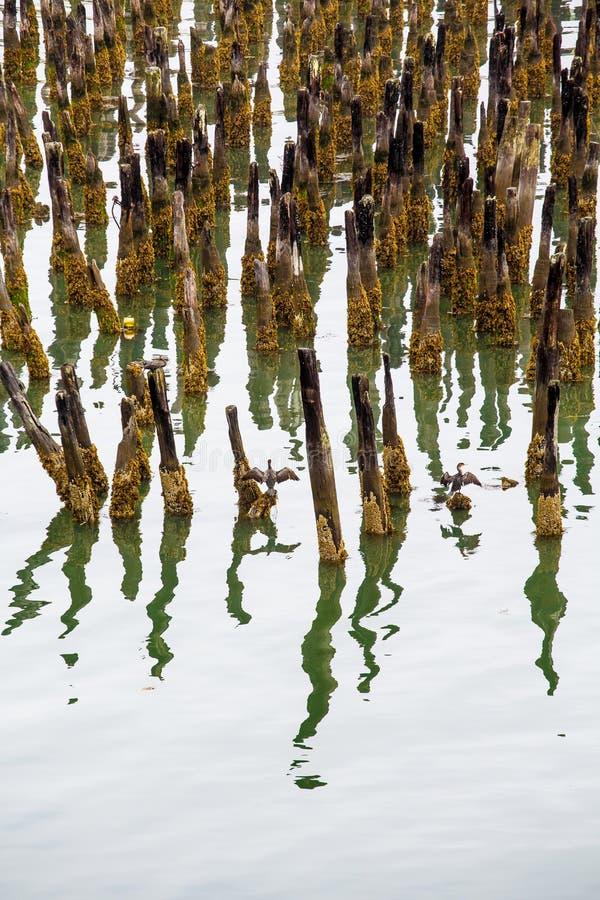 Lichen Covered Pilings in porto fotografia stock