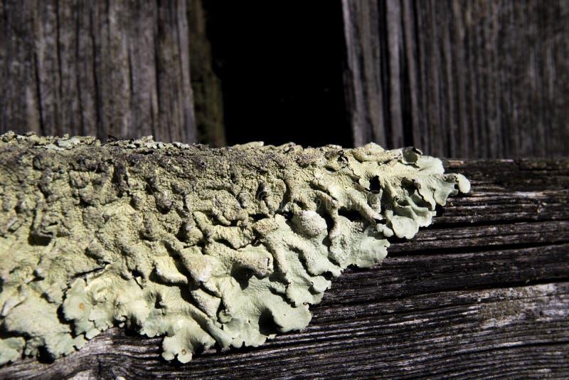 Lichen foliolé sur la clôture de ferme image stock