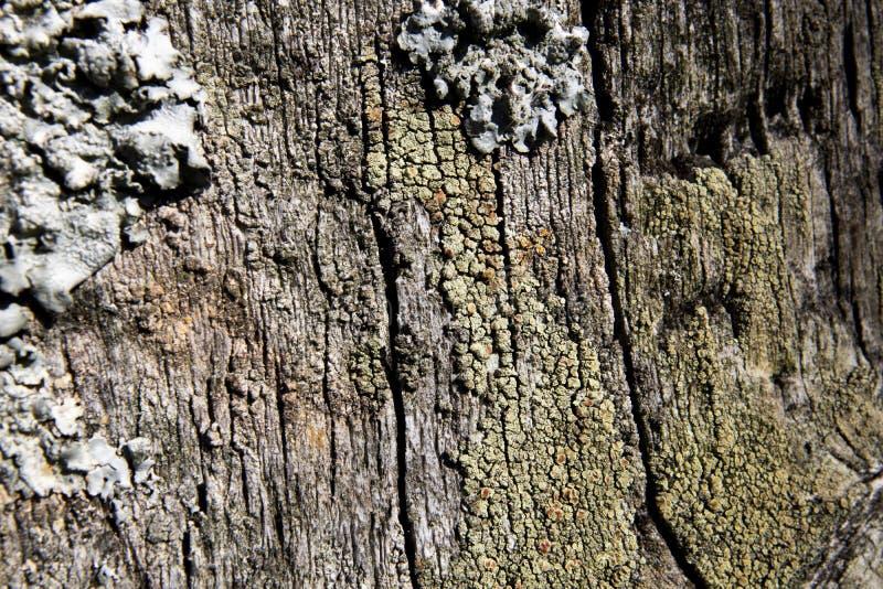 Lichen foliolé sur la clôture de ferme image libre de droits