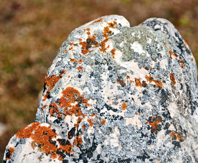 Lichen growing on rock royalty free stock photos