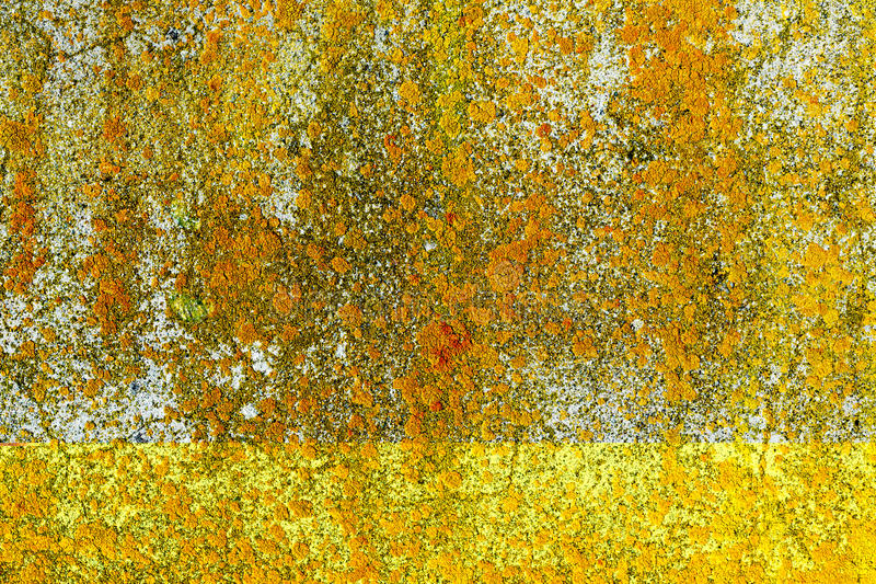 Lichen jaune sur le mur en béton image libre de droits