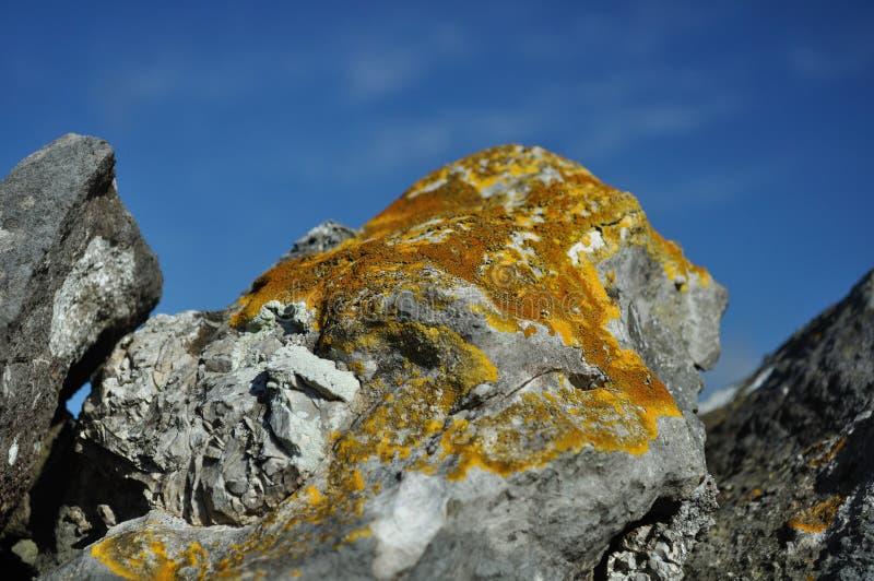 Download Lichen On Limestone Rock, Derbyshire, UK Royalty Free Stock Photos - Image: 24398938