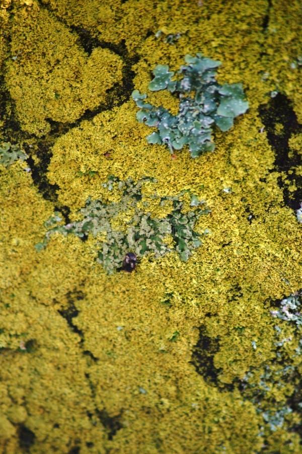Lichen Macro image stock