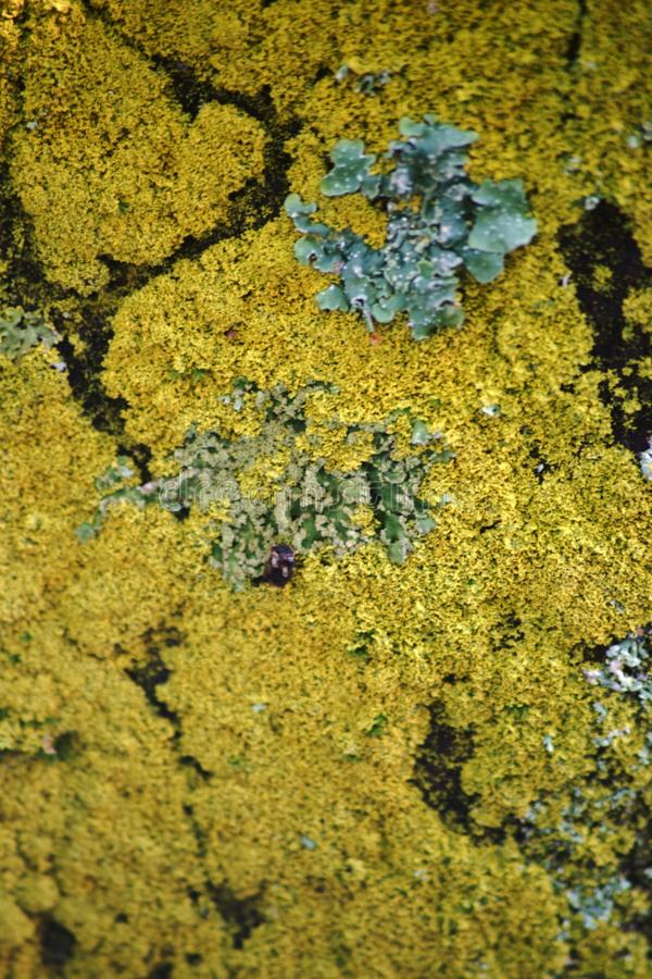 Lichen macro stock image