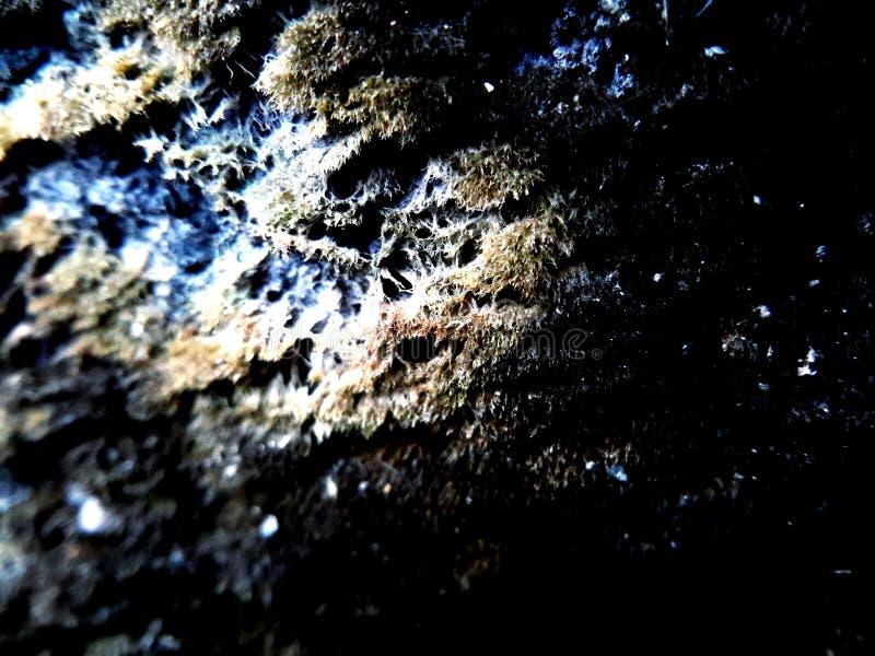 Lichen&moss stockfotografie