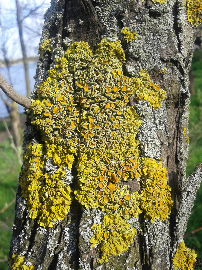 Lichen and moss on tree royalty free stock photos