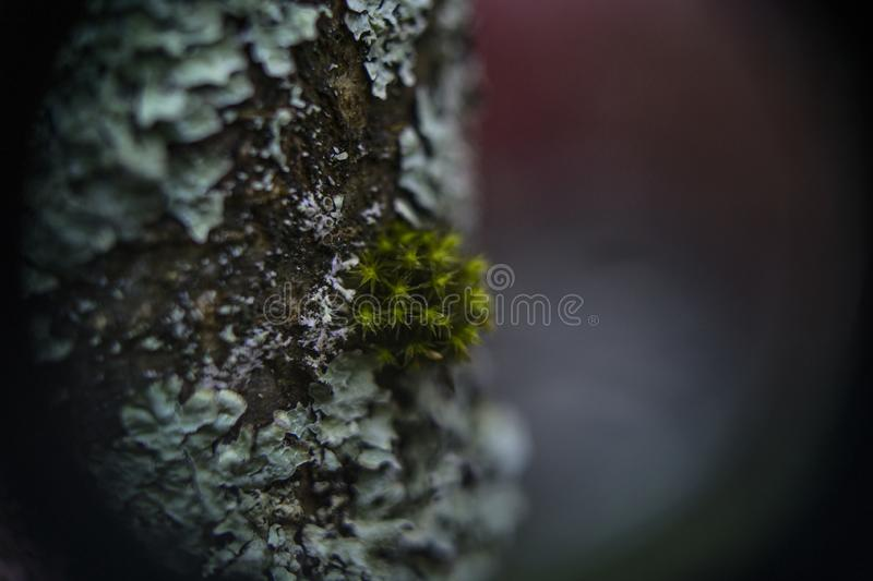 Lichen and Moss royalty free stock images