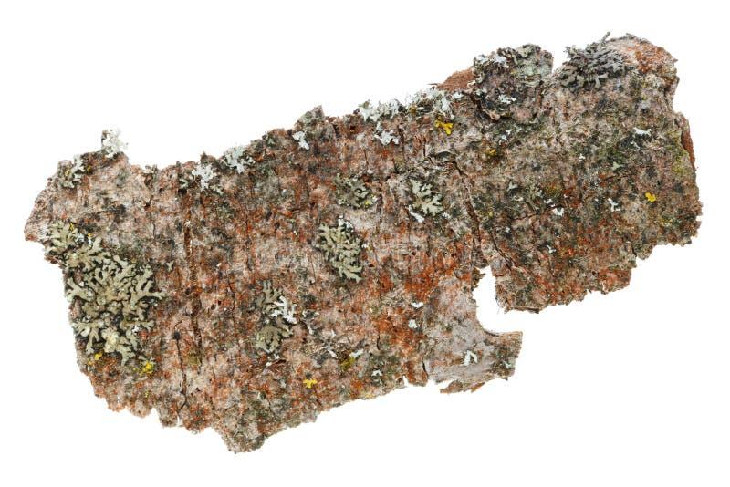 Lichen, mousse et toute autre matière organique de l'écorce du vieil APP image libre de droits
